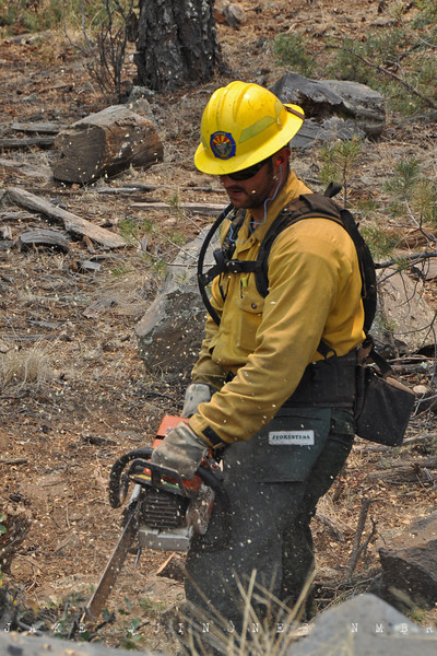 A fire crew member from Chandler, AZ clears the forest at Hell Roaring Mesa (3 miles northwest of Luna, NM) to inhibit the ensuing Wallow Fire.-Catron County, NM