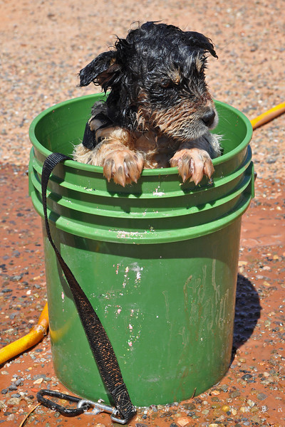 Mexican Water, AZ- I put her in haunches first and she put her front paws on the bucket rim in protest. She then realized that she liked the feeling of the cool water and settled down. She looked scrawny once she was wet and her fur was matted. I lathered and rinsed the pup four or five times until the bath water lost its pink tinge. Full story: http://newmexicobackroads.blogspot.com/2011/07/never-wrong-turn-part-ii.html